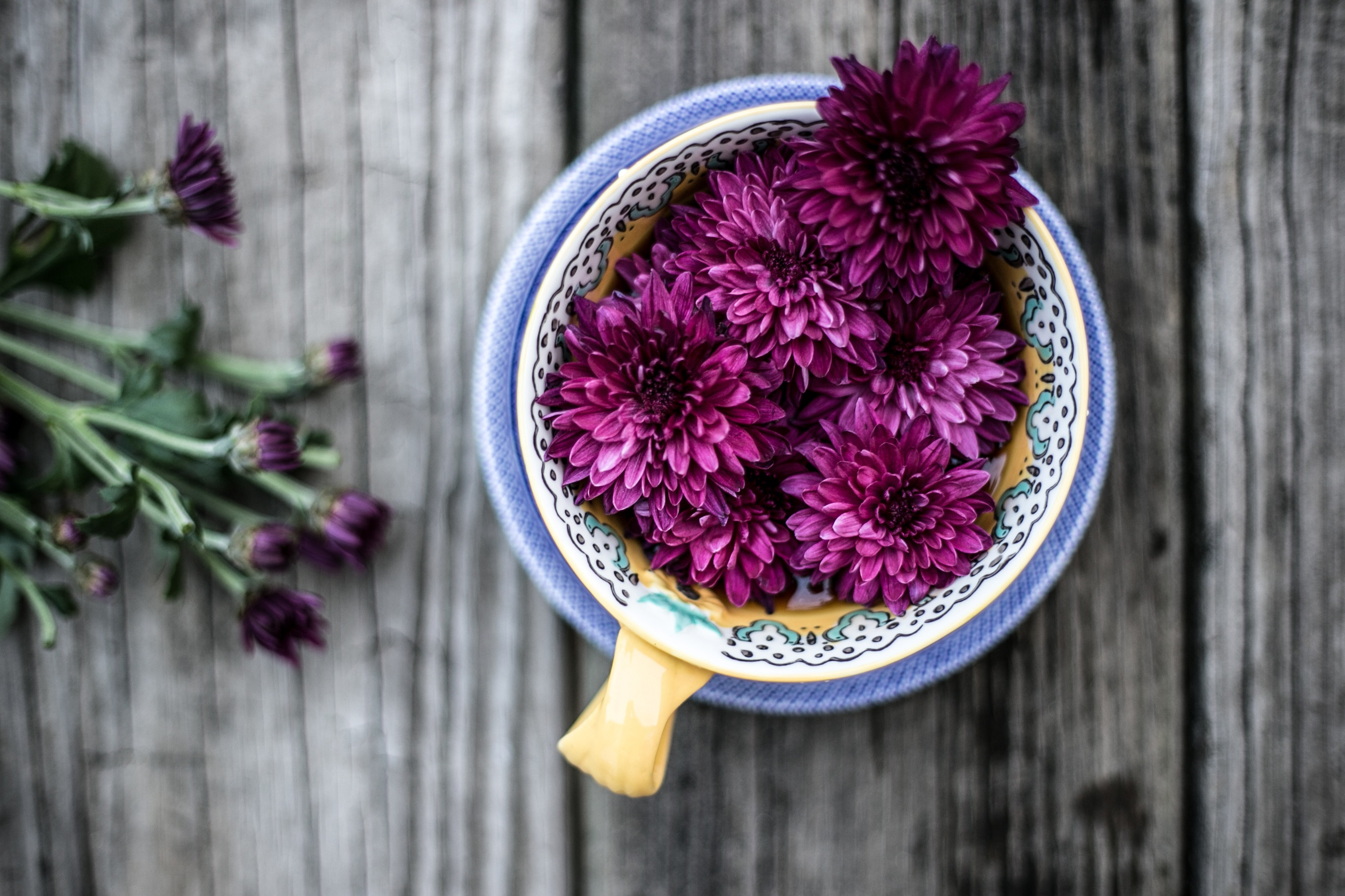 Purple dahlia flowers heads in a bowl on a rustic wooden table.